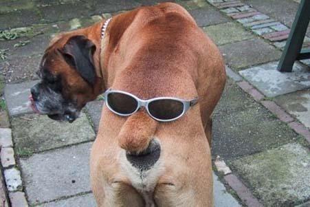 84_cooldog.jpg