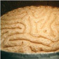 BrainKrausen2.jpg