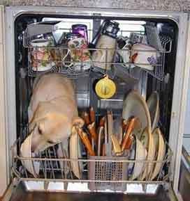 dogwasher.jpg