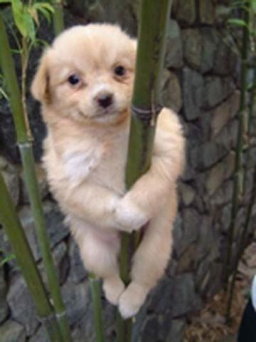 Poledancer2.jpg
