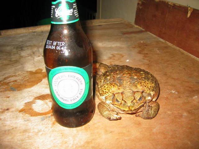 toad_near_my_beer_001.jpg