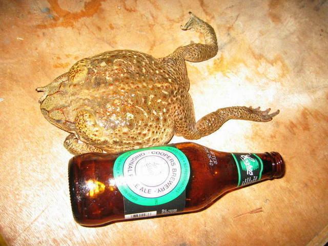 toad_near_my_beer_002.jpg
