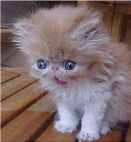 ugly_kitten.jpg