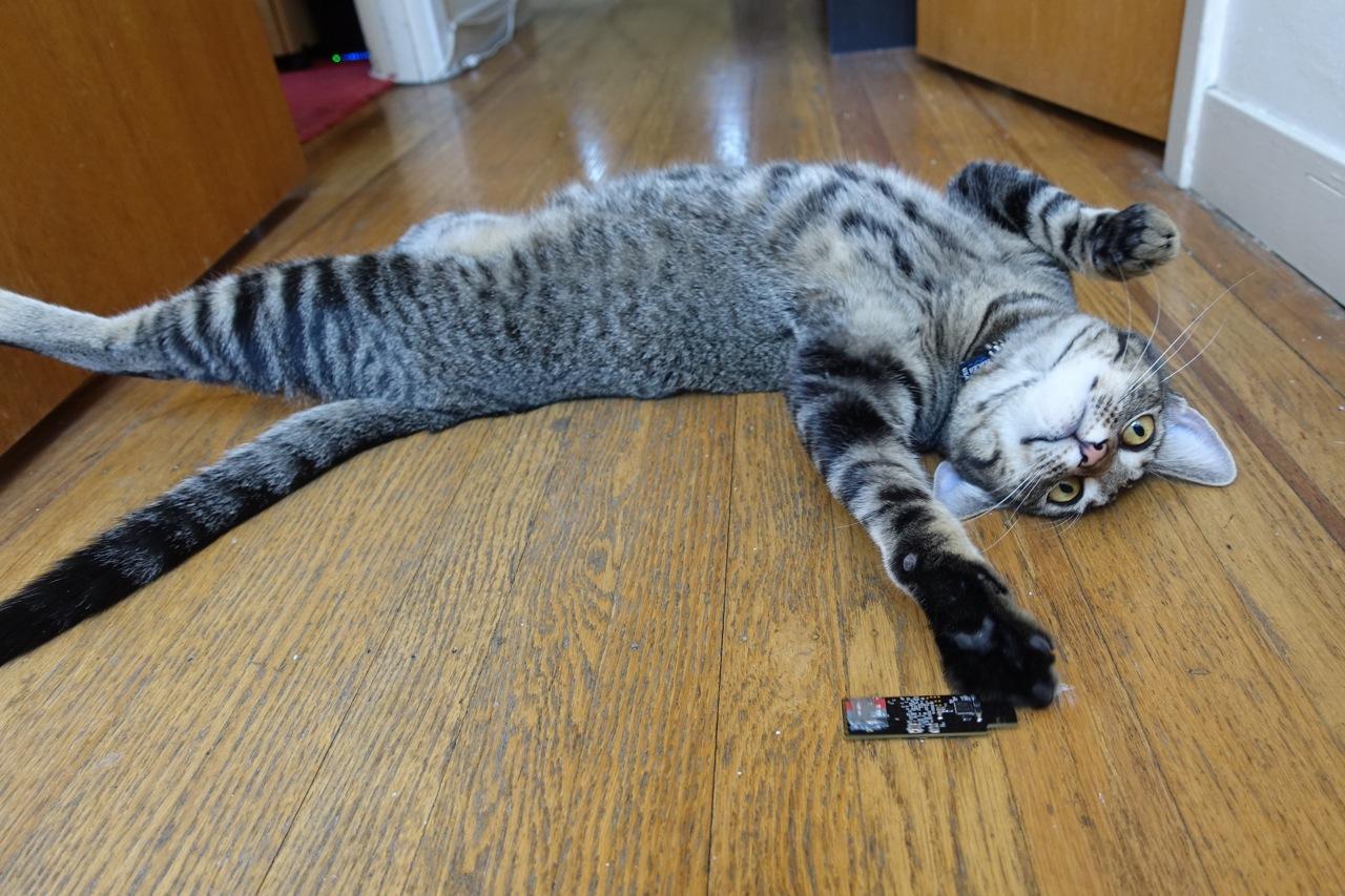 usb kitten.jpg